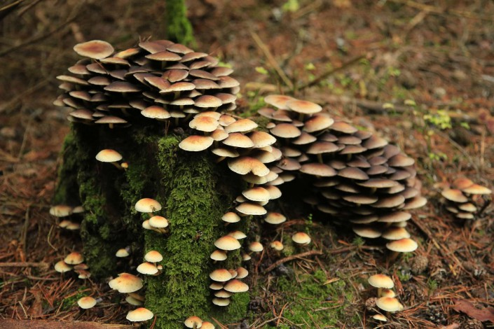 Bayrischer Wald - Pilze