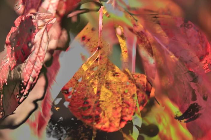 Autumnleaves 1