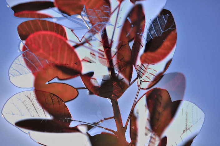 Autumnleaves 2
