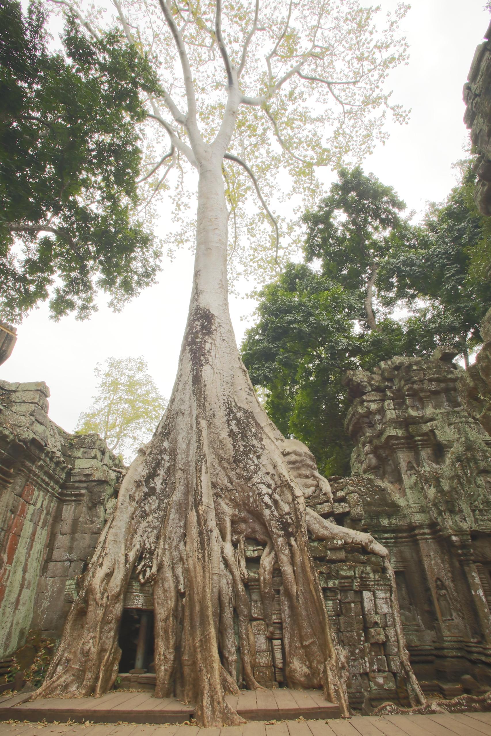angkor wat 1 by - photo #20
