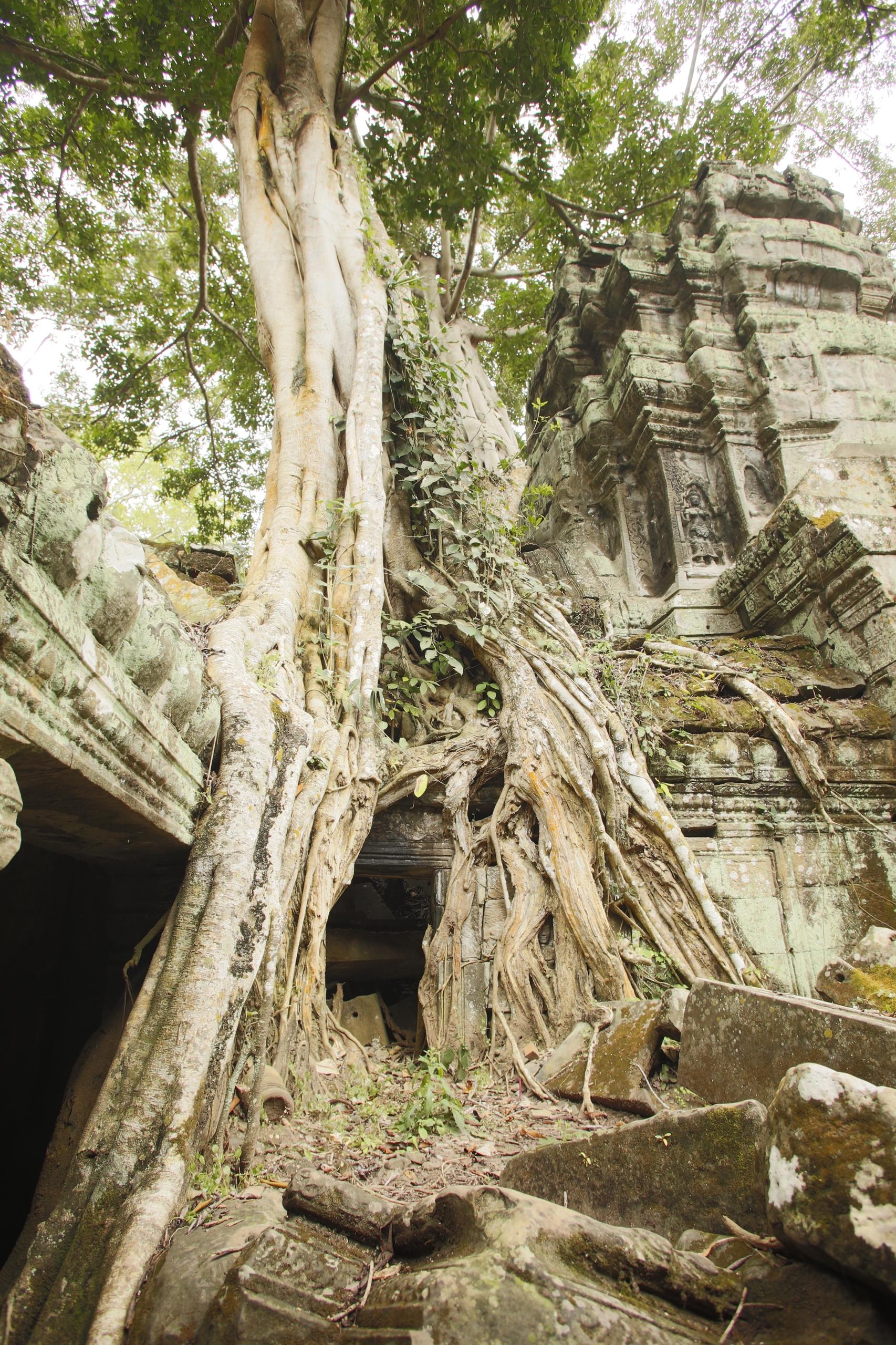 angkor wat 1 by - photo #29