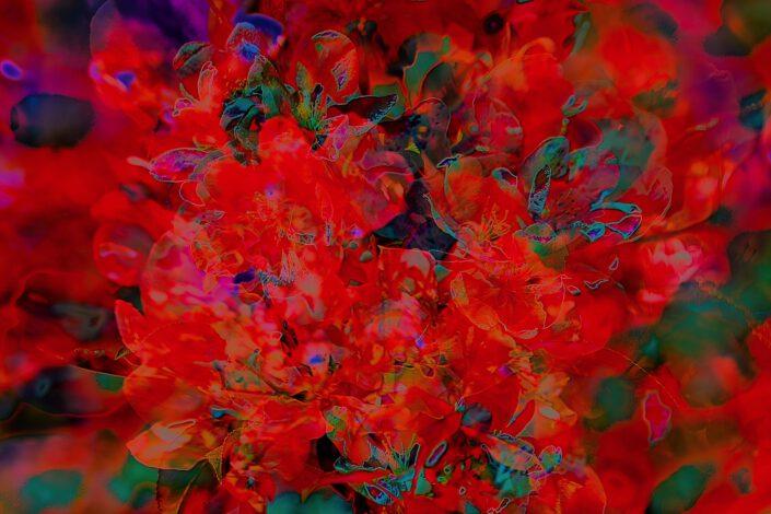 Rosa Blüten 3