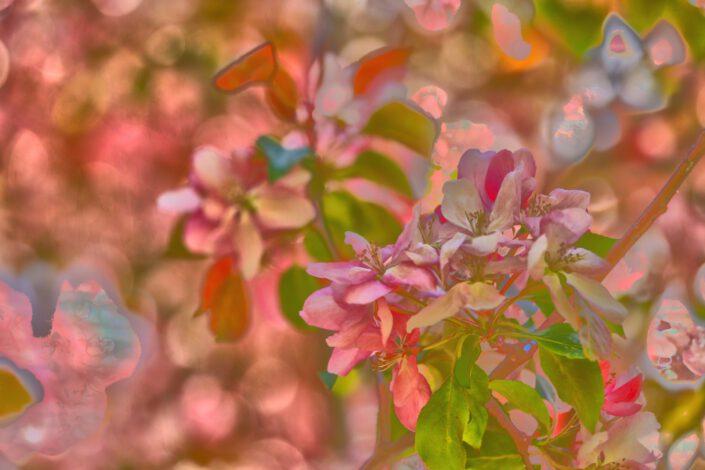 Rosa Blüten 1